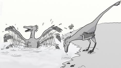 RaptorBathing copy